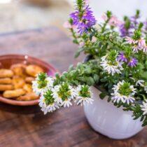 Blumenstrauß und Snack auf dem Eßtisch